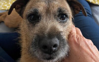 Trust, gratitude and a little rescue dog called Woodie